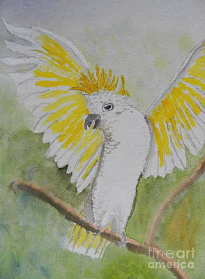 Suphar Crested Cockatoo Print by Pamela  Meredith