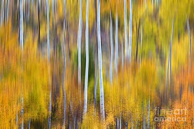 Corporate Art Photograph - Surreal Aspen Tree Magic Abstract Art by James BO  Insogna