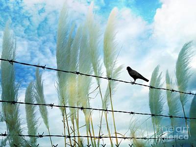 Surreal Dreamy Raven Sitting On Fence Blue Sky Print by Kathy Fornal