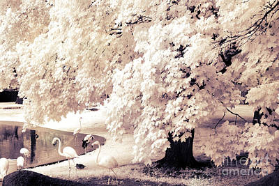 Surreal Infrared Ethereal Nature With White Flamingos - Infrared Trees And Flamingos  Print by Kathy Fornal