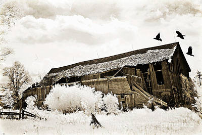 Surreal Infrared Sepia Vintage Crumbling Barn With Flying Ravens - The Passage Of Time Print by Kathy Fornal