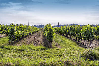 Surrounded By Vineyards Print by Georgia Fowler
