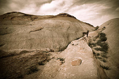 Weimaraner Photograph - Surveying The New Camp by Julie Niemela
