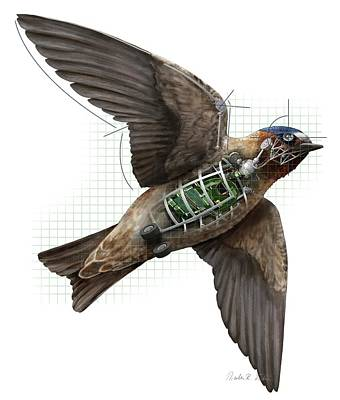 Swallow Drone Robotics Print by Nicolle R. Fuller