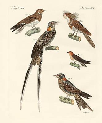 Swallow Drawing - Swallow-like Birds by Splendid Art Prints