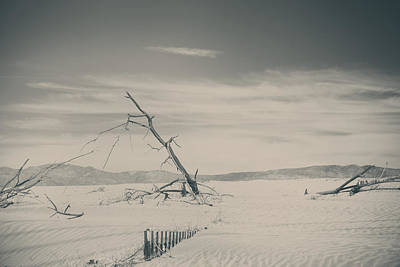 Palm Desert Photograph - Swallowed Up by Laurie Search