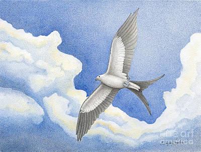 Swallowtail Kite Print by Wayne Hardee
