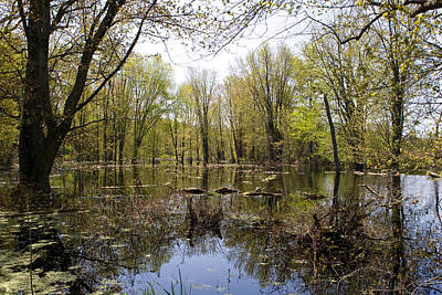 Photograph - Swampy by Edward Kay