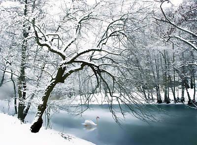 Swans.. Digital Art - Swan A Swimming by Jessica Jenney