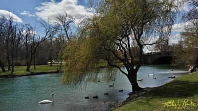 Swan Canal Original by Michael Rucker