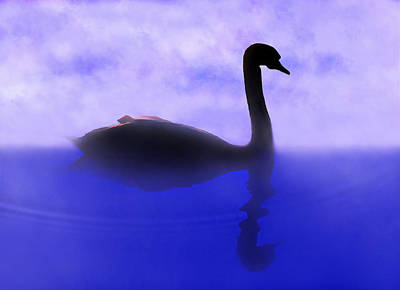 Swan Digital Art - Swan Lake by Terril Heilman