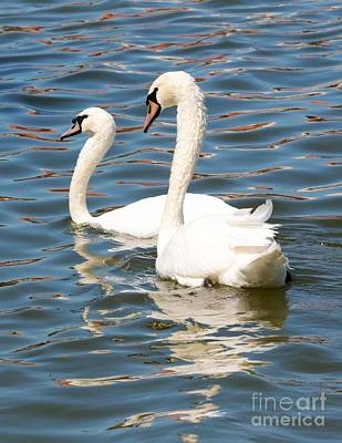 Swans And Swirls Print by Carol Groenen