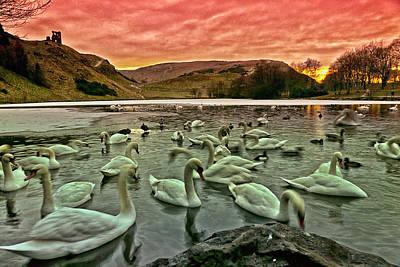 Swans In The Loch Print by Jean-Noel Nicolas