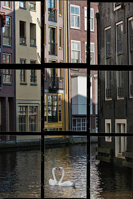 Swans Love Amsterdam Print by Joan Carroll