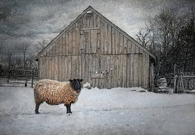 Sheep Photograph - Sweater Weather by Robin-lee Vieira