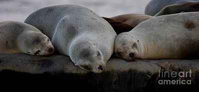 Sweet Dreams Seals Print by Ruth Jolly
