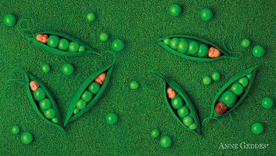 Peas Photograph - Sweet Peas by Anne Geddes