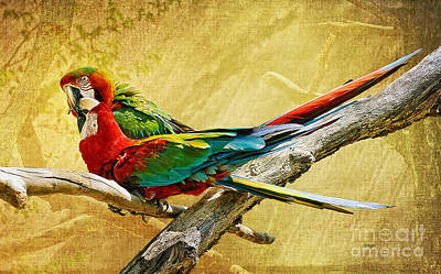 Macaw Digital Art - Sweet Sweet Love by Lois Bryan