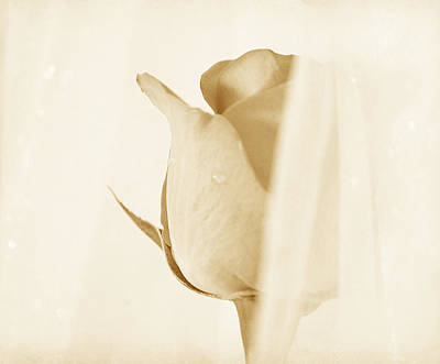 Floral Art Photograph - Sweetest Illusion by  The Art Of Marilyn Ridoutt-Greene
