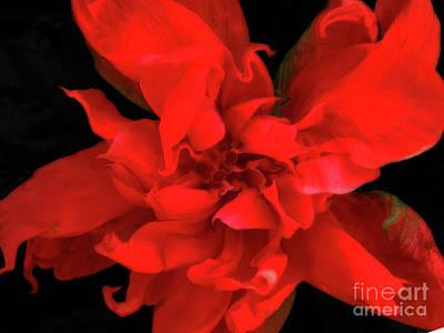 Digitalart Photograph - Sweetheart by Molly McPherson