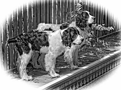 Puppy Photograph - Swift And Kaya by Steve Harrington