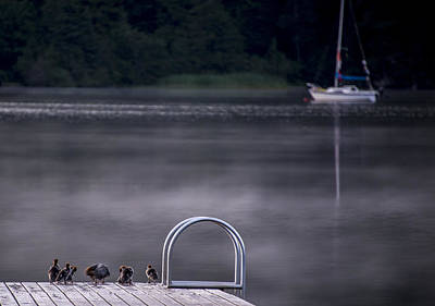 Sailboat Photograph - Swim Or Sail by Aaron S Bedell