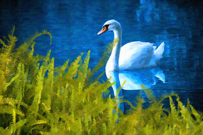 Swimming Swan And Ferns Print by Kenny Francis