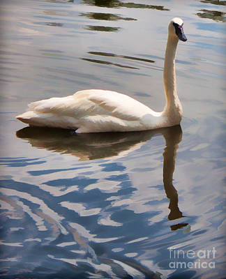 Swimming Swan Print by Joann Copeland-Paul