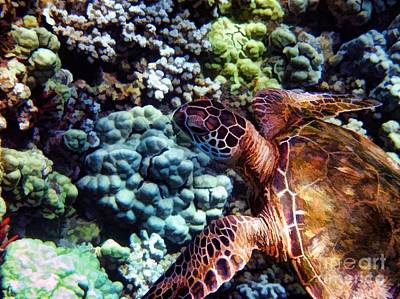 Swimming With A Sea Turtle Print by Peggy J Hughes