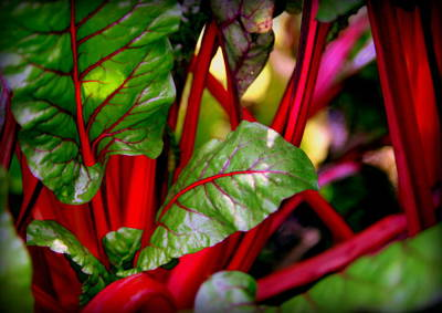 Swiss Chard Forest Print by Karen Wiles