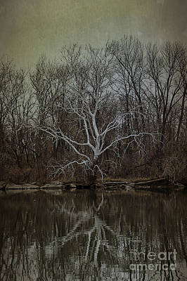 Tree Spirit Photograph - Sycamore Dancer by Terry Rowe