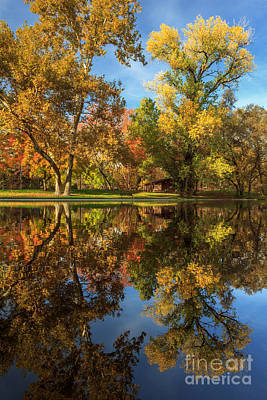 Sycamore Pool Reflections Print by James Eddy