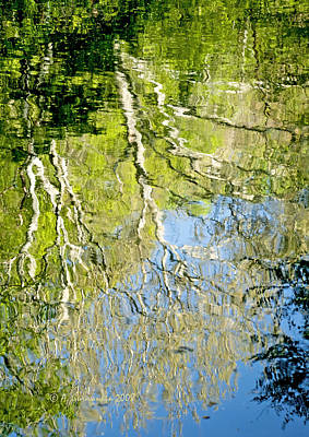 Print featuring the photograph Sycamore Trees Reflected In A Stream by A Gurmankin