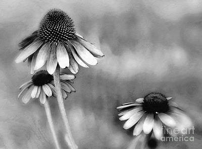 Photograph - Symphony In Black And White  by Andrea Kollo