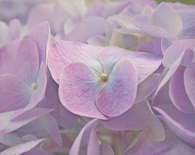 Symphony In Purple Print by Kim Hojnacki