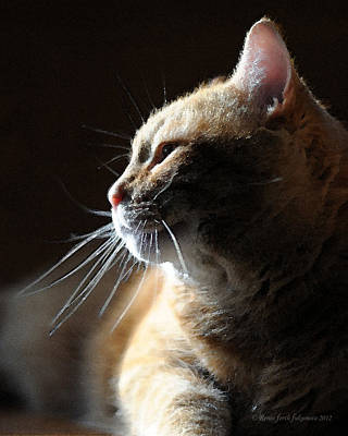 Orange Tabby Photograph - Tabby Cat Bathed In Light by Renee Forth-Fukumoto