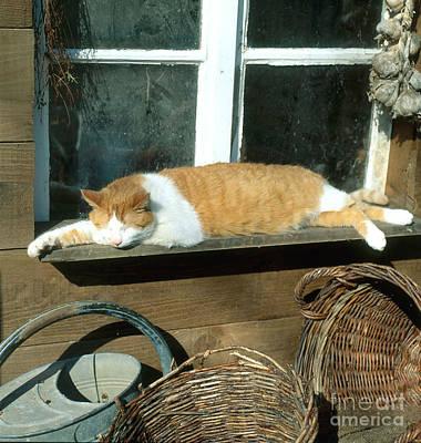 Tabby Cat Print by Hans Reinhard