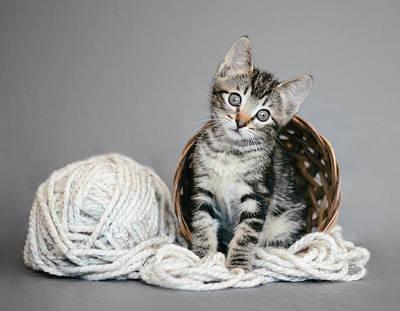 Gray Tabby Photograph - Tabby Kitten And Yarn - Animal Rescue Portraits by Andrea Borden