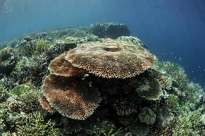 Table Corals Print by Ethan Daniels