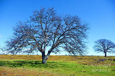 Oak Photograph - Table Mountain Trees 2 by Joshua Greeson