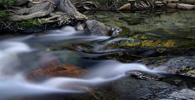 Tahoe Eagle River Print by Dave Dilli