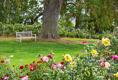 Contemplating Photograph - Take A Seat - Beautiful Rose Garden Of The Huntington Library. by Jamie Pham