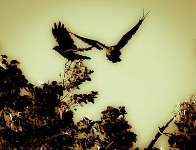 Photograph - Take Off by Edward Kay