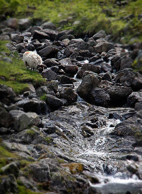 Cambria Photograph - Taking A Drink At The Mountain Stream by Jerry Deutsch