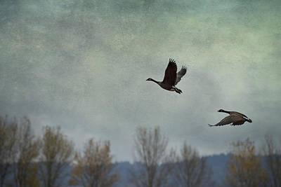 Taking Flight Print by Belinda Greb