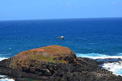 Taking Flight Hawaii Original by Greg Cross