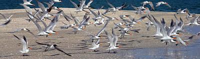 Flying Seagull Photograph - Taking Flight by Jon Neidert