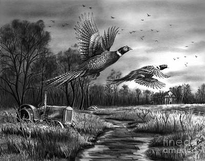 Pheasant Drawing - Taking Flight  by Peter Piatt