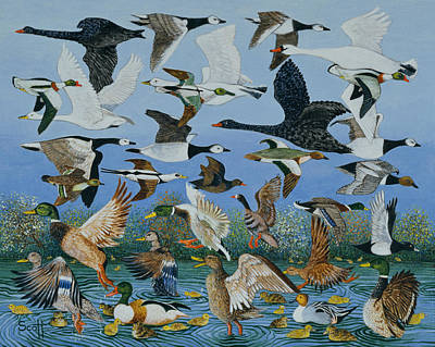 Geese Drawing - Taking Off by Pat Scott