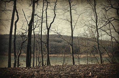 Impressionist Photograph - Tales From The Woods by Taylan Soyturk